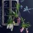 Тенденции в дизайне интерьера: орхидеи