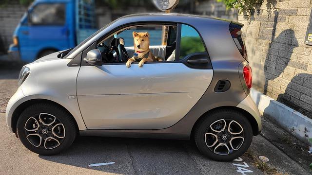 Чтобы Барсик был доволен или Как правильно перевозить животных в автомобиле