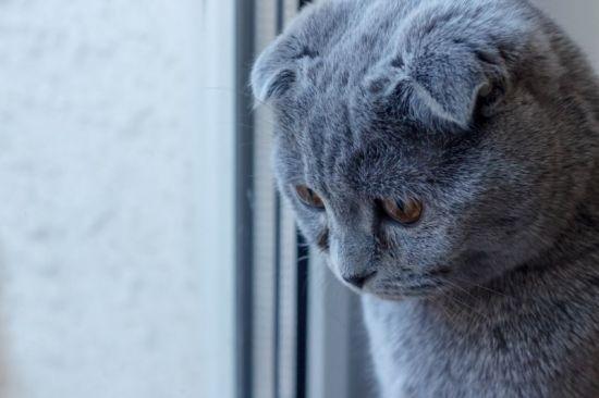 Причины депрессии у кошки и что делать, если у кошки депрессия?